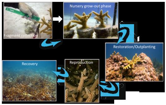 flow-restoration