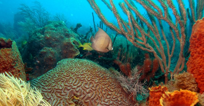 The Florida Reef Resilience Program